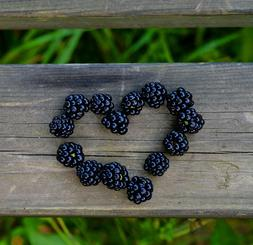BLACKBERRY AMBER Scent Products For Home Bath Body Bergamot