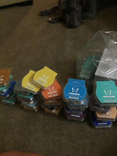 scentsy pack scent bars
